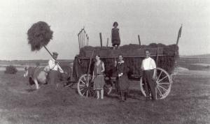 Familie Frank (Kirchberg) bei der Krummeternte (1932)