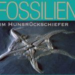 Plakat Fossilien